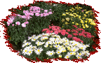 picture of flower bed